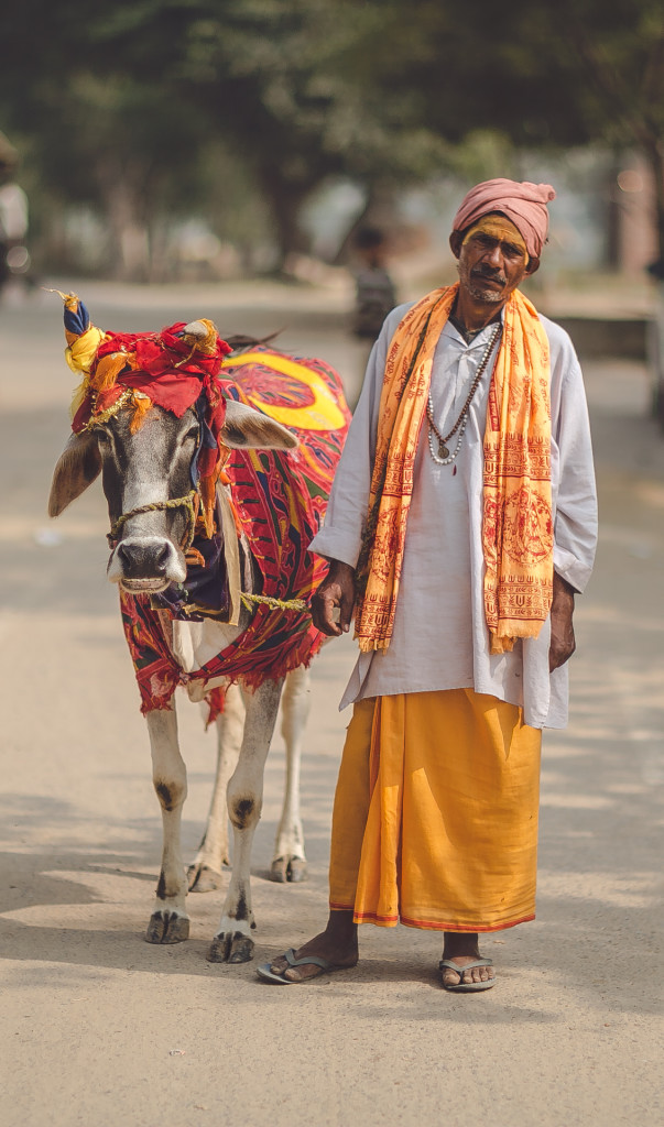 Cow dressed by the best!